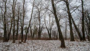 Парк, усадьба Пономарева