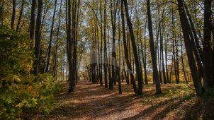 Парк, XIX в., усадьба «Покровское-Огниково»