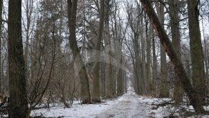 Парк, конецХVIII — началоХIХ в., усадьба «Иславское»