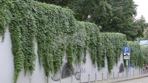 Ограда, городская усадьба