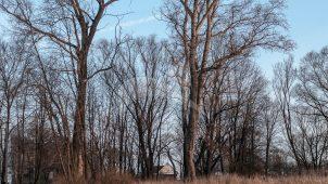 Парк, 2-я половина XVIII в., усадьба «Подмоклово»