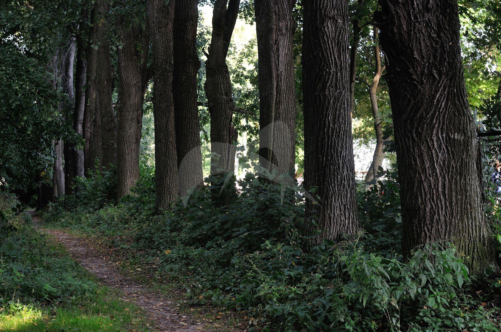 Парк, усадьба у пристани Троицкое