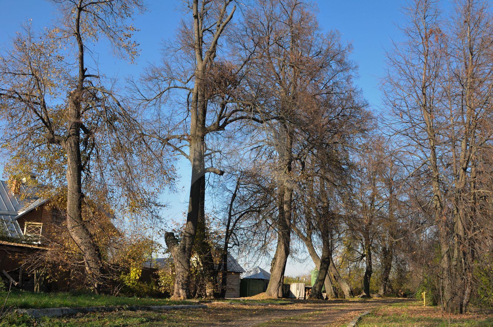 Парк, 2-я половина XVIII — XIX в., усадьба «Остров»