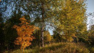 Парк, усадьба «Ламишино»
