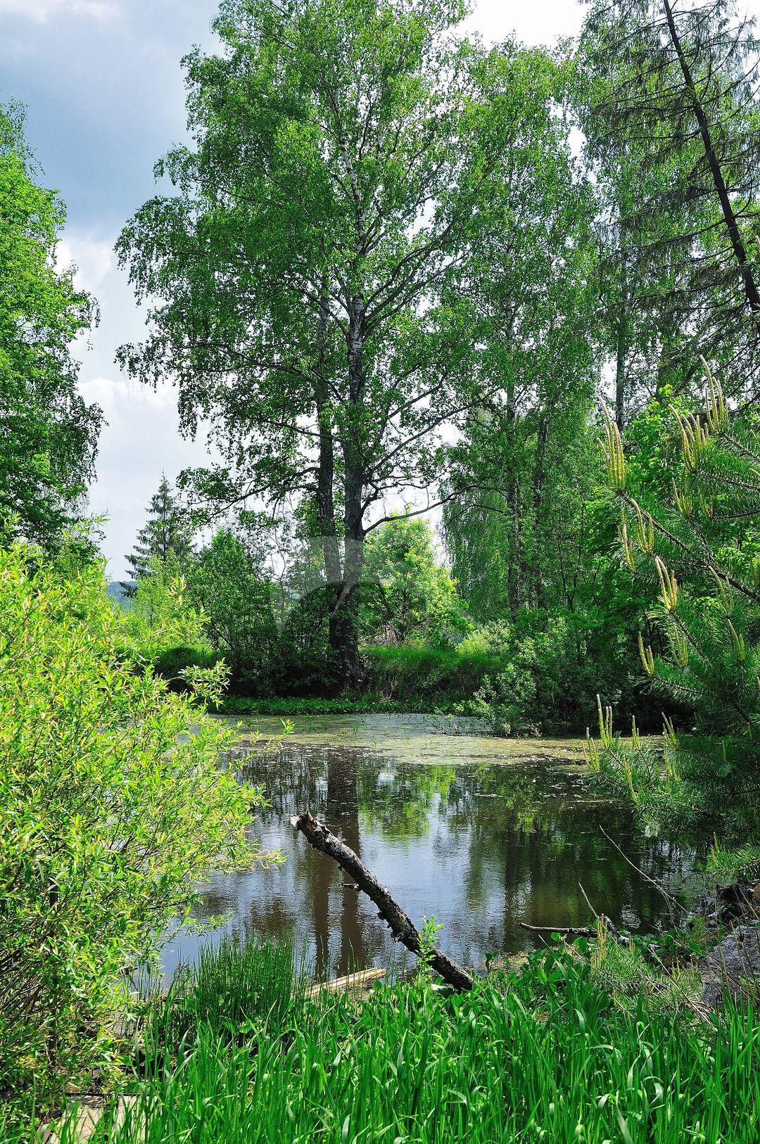 Парк, усадьба Урусова, усадьба «Спасское-Торбеево», где в 1889 г. жил и работал писатель Толстой Лев Николаевич