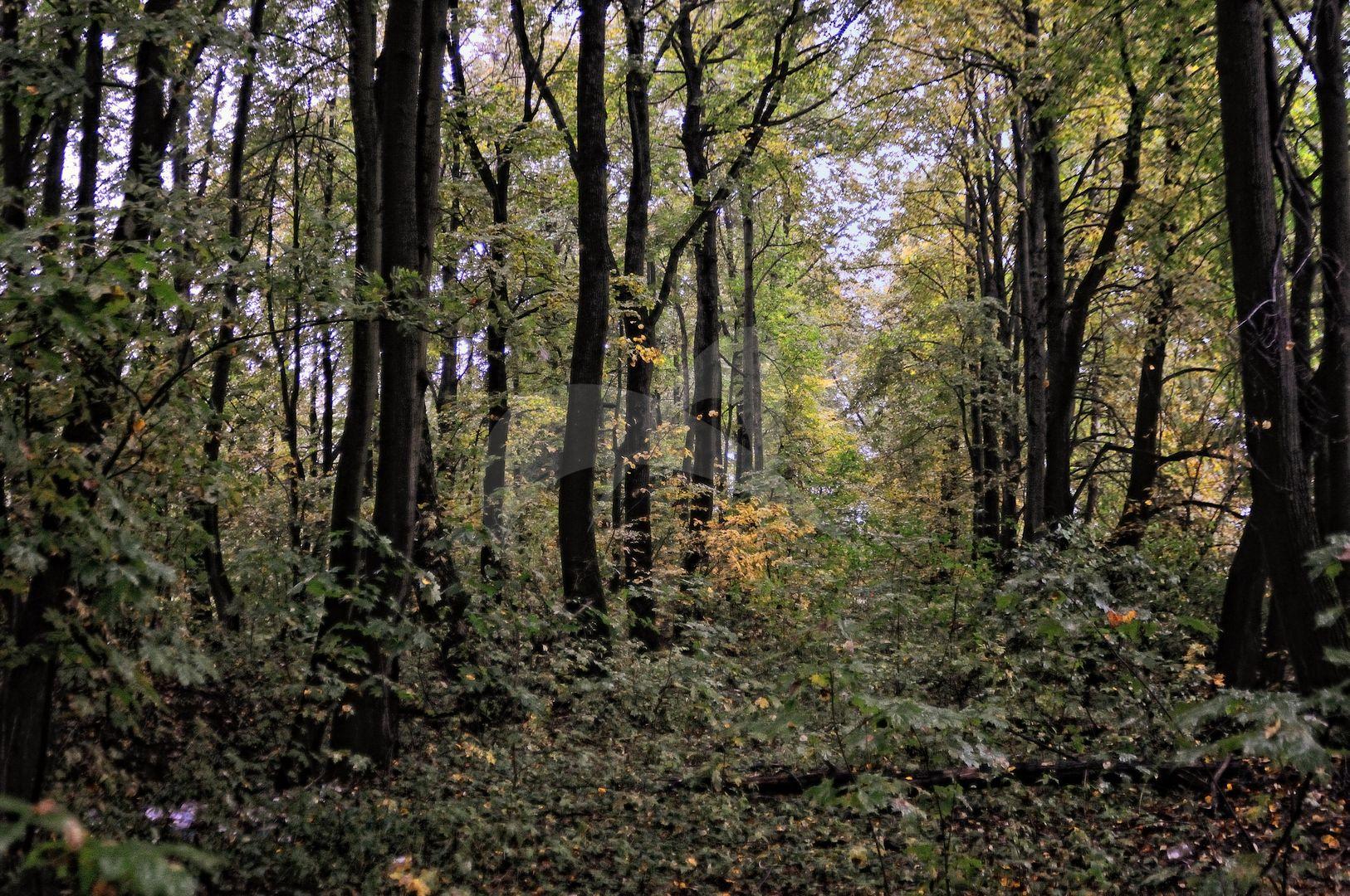 Парк с прудами, усадьба «Ляхово»