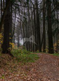 Парк, усадьба Молоди (Бестужева-Рюмина)