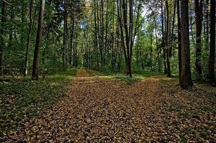 Парк, усадьба Гагарино