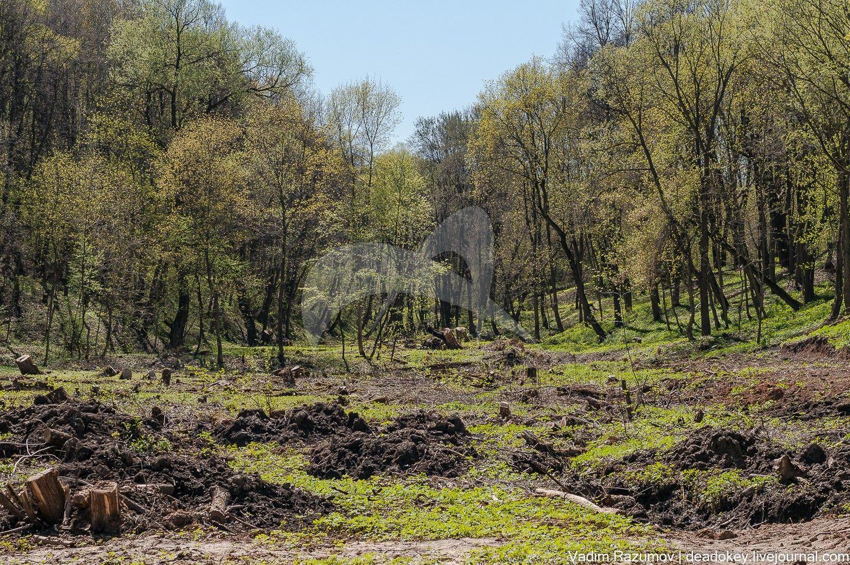 Парк, последняя четверть XVIII — начало ХХ в., усадьба «Тарасково»