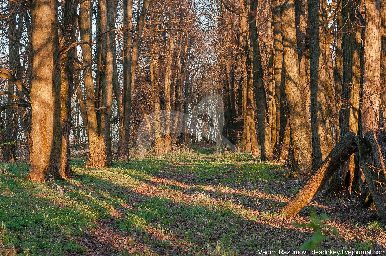 Парк, серединаXVIII — перваяполовинаXIX вв., усадьба «Стародуб»