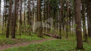 Парк, усадьба Петровское-Алабино (Демидовых), ХVIII в., усадьба «Петровское», 2-я половина XVIII в.