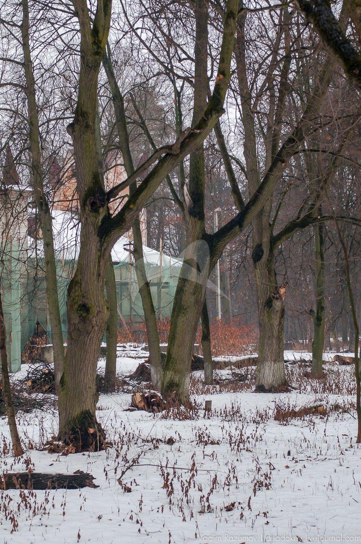 Курдонер с круговой липовой аллей, усадьба «Тимохово», XIX в.