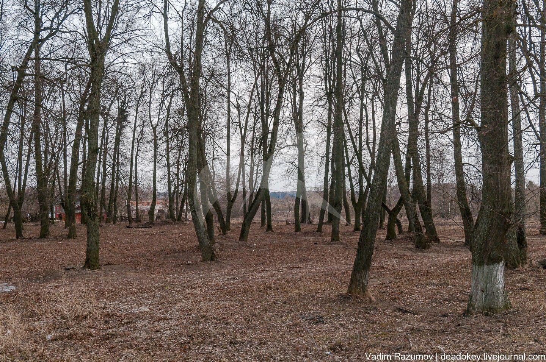 Парк, начало  XIX в., усадьба «Белая Колпь»