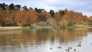 Парк с системой прудов, усадьба «Покровское» («Глебово-Стрешнево»), XVIII-XIX вв.